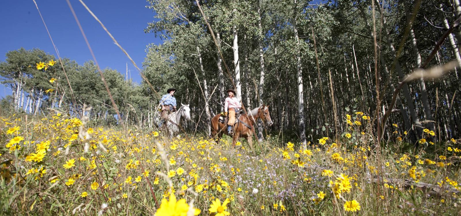rocky mountain views via horseback